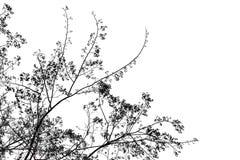 Silhouette d'arbre d'isolement sur le fond blanc, l'espace de copie photo stock