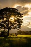 Silhouette d'arbre mort Image stock