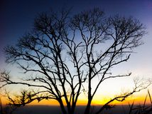 Silhouette d'arbre mort Photos stock