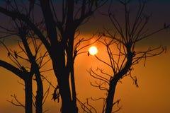 Silhouette d'arbre mort Photo stock