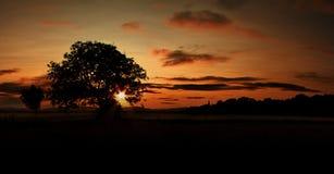 Silhouette d'arbre pendant le coucher du soleil africain Photos stock