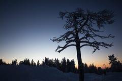 Silhouette d'arbre sur le fond de forêt d'hiver en Finlande, Lévi Photographie stock libre de droits