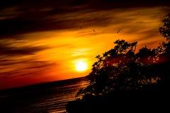 Silhouette d'arbre sur le fond de mer de coucher du soleil Image stock