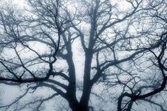 Silhouette d'arbre un jour brumeux. photo libre de droits