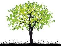 Silhouette d'arbre vieille, herbe Photographie stock