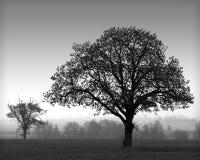 Silhouette d'arbres Photo libre de droits