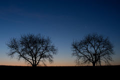Silhouette d'arbres images stock