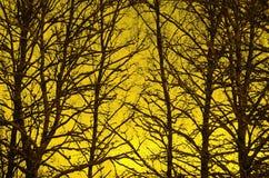 Silhouette d'arbres de coucher du soleil Photos stock