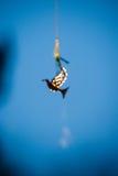 Silhouette d'or de pigeon defocused Photo libre de droits