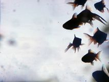 Silhouette d'or de poissons photo stock