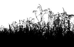 Silhouette d'herbe Photo stock