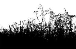 Silhouette d'herbe Photo stock
