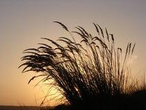 Silhouette d'herbe au coucher du soleil image stock