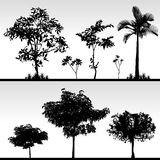 Silhouette d'herbe d'arbre Photographie stock