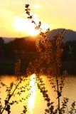 Silhouette d'herbe de fontaine Images libres de droits