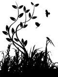 Silhouette d'herbe et d'oiseaux Photos stock