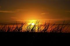Silhouette d'herbe pendant le coucher du soleil Images stock