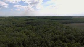 Silhouette d'homme se recroquevillant d'affaires Voler au-dessus de la belle forêt banque de vidéos