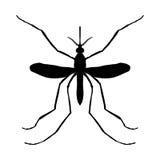 Silhouette d'insecte insecte un moustique réaliste Silhouette de moustique de pipiens de Culex Moustique sur le blanc Images stock