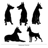 Silhouette d'isolement d'un pinscher de dobermann sur un fond blanc Photo libre de droits