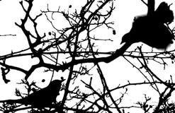 Silhouette d'oiseau Photo libre de droits