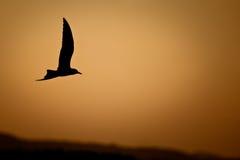 Silhouette d'oiseau Image libre de droits