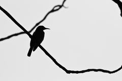 Silhouette d'oiseau Photo stock