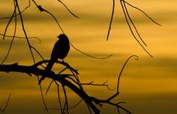 Silhouette d'oiseau Images libres de droits