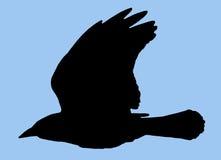 Silhouette d'oiseau photographie stock libre de droits