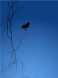 Silhouette d'oiseau illustration libre de droits