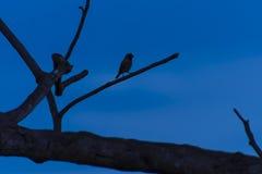 Silhouette d'oiseau de vol Image libre de droits