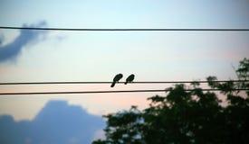 Silhouette d'oiseau sur le câble électrique sur le fond bleu Photo stock