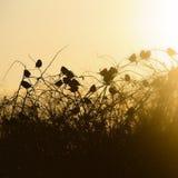 Silhouette d'oiseaux Photo libre de droits