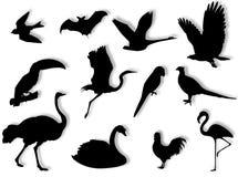 Silhouette d'oiseaux Photo stock