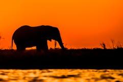 Silhouette d'un éléphant pendant le coucher du soleil Photo stock