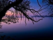 Silhouette d'un arbre photographie stock libre de droits