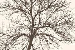 Silhouette d'un arbre Photos stock