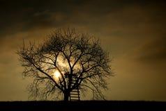 Silhouette d'un arbre Images libres de droits
