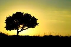 Silhouette d'un arbre au coucher du soleil photo stock