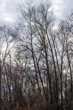 Silhouette d'un arbre contre un ciel photographie stock libre de droits
