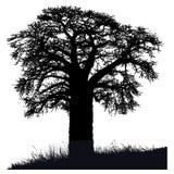 Silhouette d'un arbre de baobab Photos stock