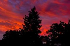 Silhouette d'un arbre de Noël sur un fond de coucher du soleil Images stock