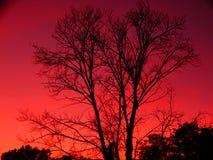 Silhouette d'un arbre et d'un ciel rose et rouge image libre de droits