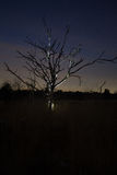 Silhouette d'un arbre mort la nuit Images stock