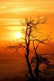 Silhouette d'un arbre par l'augmentation du Sun images libres de droits