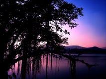 Silhouette d'un arbre pendant le coucher du soleil Photos stock