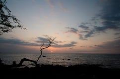 Silhouette d'un arbre sec à la plage d'Anaehoomalu pendant le coucher du soleil Photographie stock libre de droits