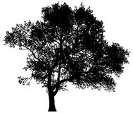 Silhouette d'un arbre solitaire Photos stock