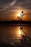 Silhouette d'un buisson Image libre de droits