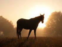 Silhouette d'un cheval Arabe contre le lever de soleil Photographie stock libre de droits